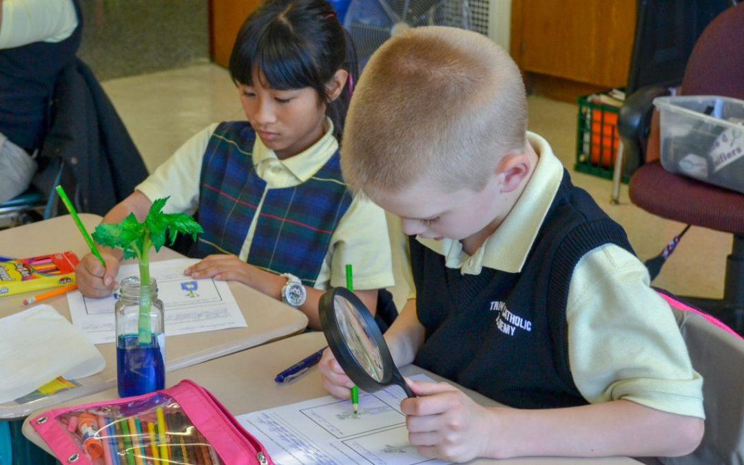 Grade 4 – Celery Discovery